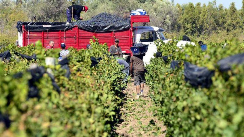 Documento de Tránsito Vegetal: productores de uva reclaman al Senasa que no sea obligatorio