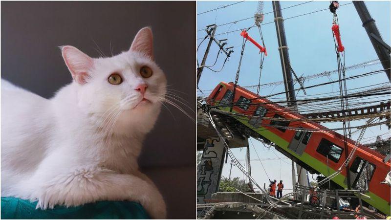Un gato sobrevivió al accidente del metro en México en que él murieron 25 personas