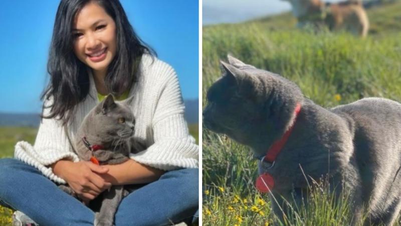 Mataron a Ponzu, uno de los gatos más populares en Instagram