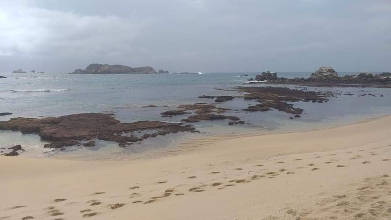 Sismo de 7,7 grados y alerta de tsunami en el Sur de México: así se alejó el mar de la costa