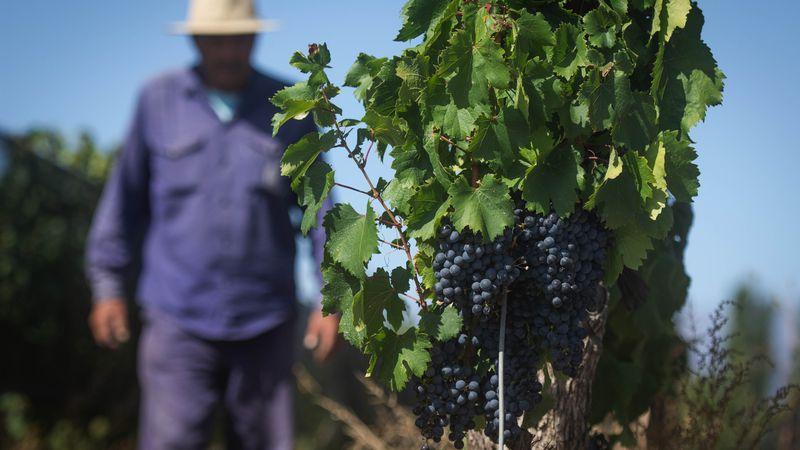 Vitivinicultura argentina: se expanden las regiones no tradicionales