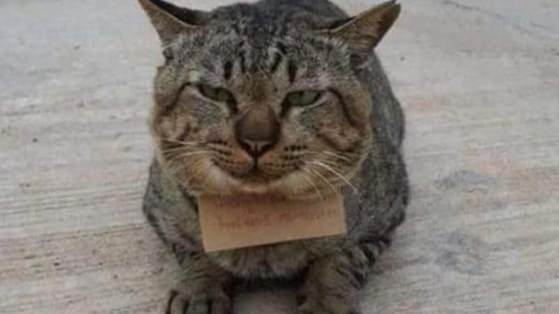 Insólito: un gato desapareció durante tres días y regresó a casa con una nota en el cuello de una deuda propia
