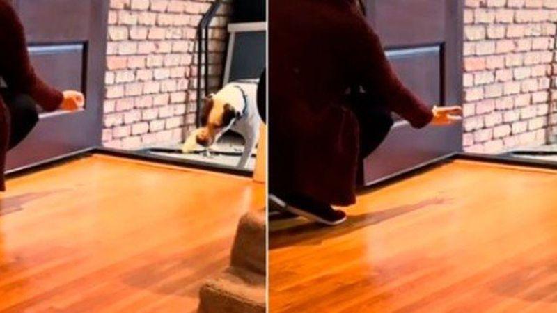 Viral: un perrito callejero conoció una casa por primera vez y su reacción estalló las redes