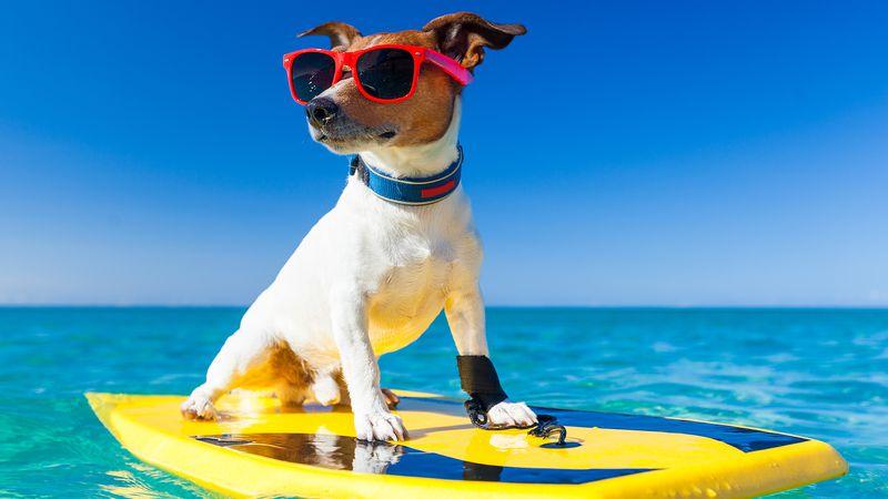 Mascotas y vacaciones: soluciones al dilema de todos los veranos