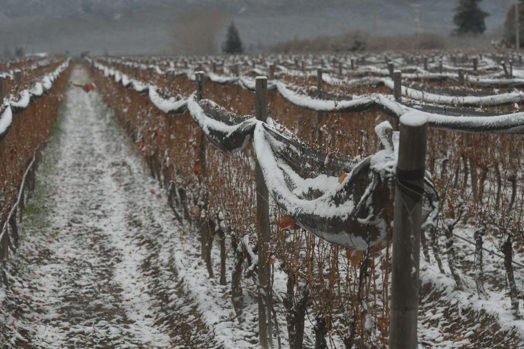 Fotos y videos: la nevada en Mendoza que embelleció el día más frío del año