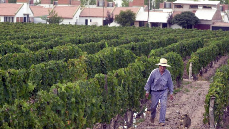Ambiente: sustentabilidad de zonas agrícolas irrigadas