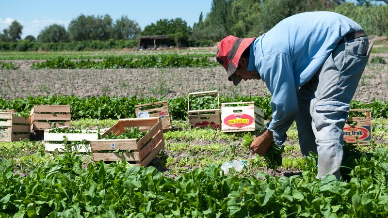 Se fijaron aumentos salariales para algunas tareas agrícolas en Mendoza y San Juan: cuáles son y cuánto cobrarán