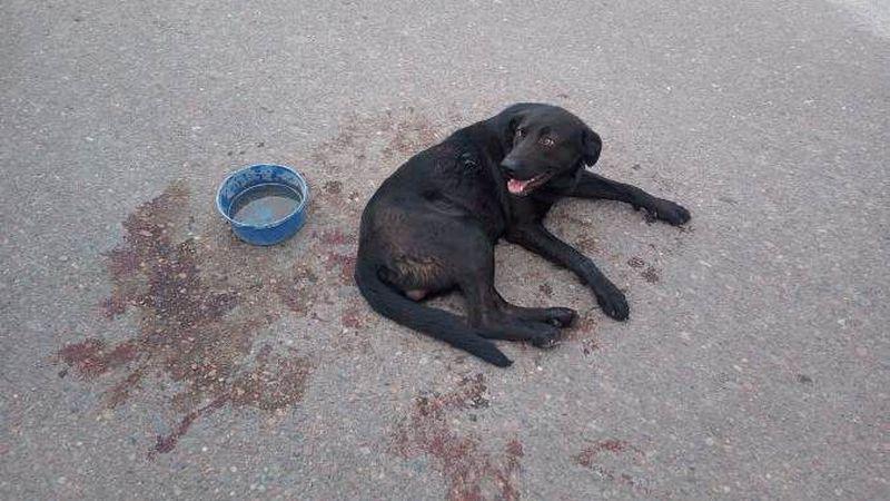 Imputaron y le quitaron el animal a la docente de Tunuyán que ató a su perro al auto y lo arrastró