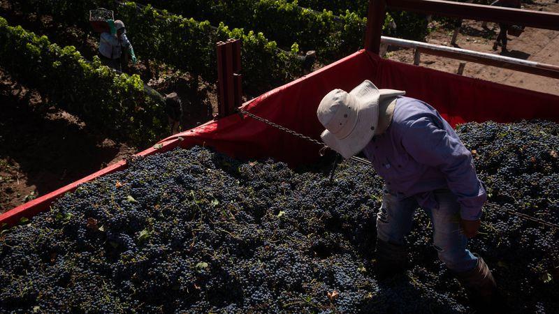 Anticipo: punto por punto, el plan vitivinícola 2030 que se anunciará en el desayuno de Coviar