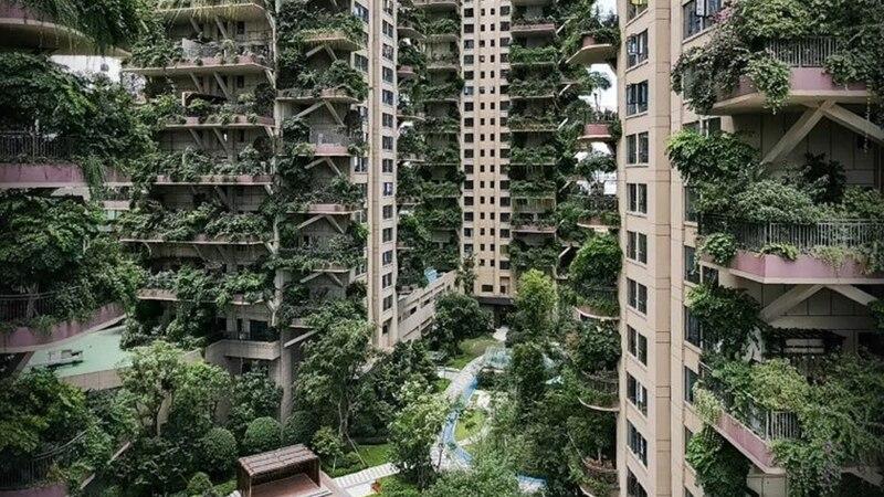 Construyeron un complejo ecológico pero lo tuvieron que abandonar por una invasión de mosquitos y plantas