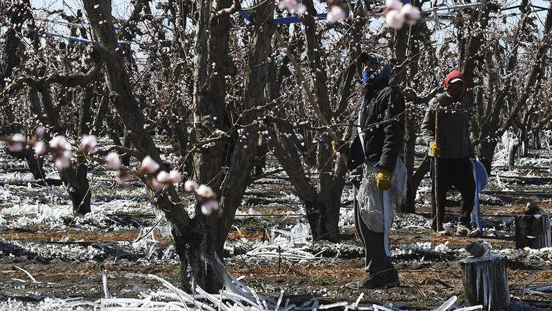 Heladas: la sequía preocupa más que una posible floración temprana