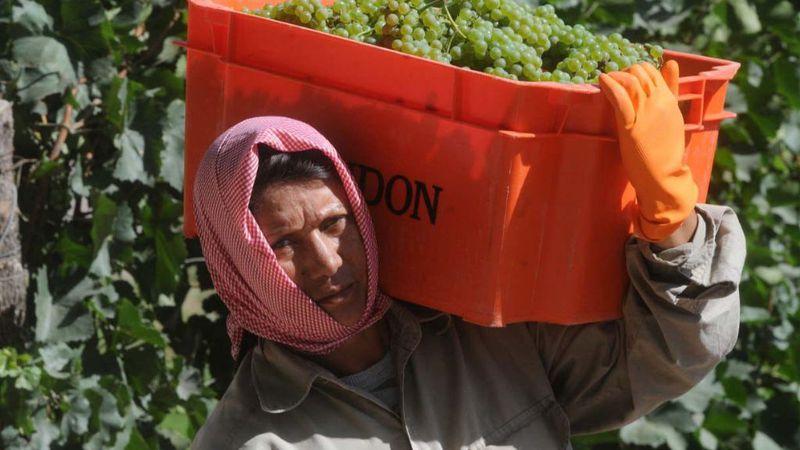 El registro de mendocinos dispuestos a trabajar en el campo ya tiene más de 5.500 postulantes