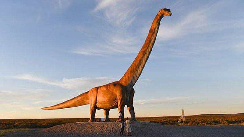 Encontraron restos fósiles de un Titanosaurio en el campus de la universidad  de Neuquén | Sociedad