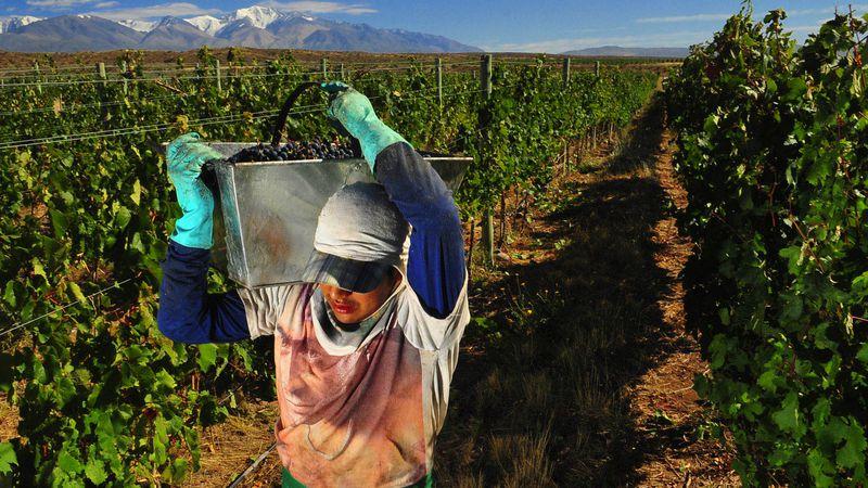 Vinos: los costos totales de producción han subido 35%