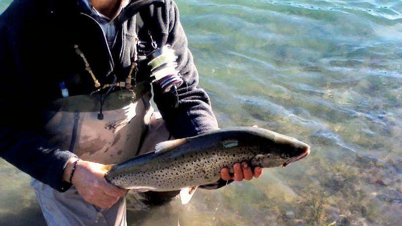 De pesca por el Limay