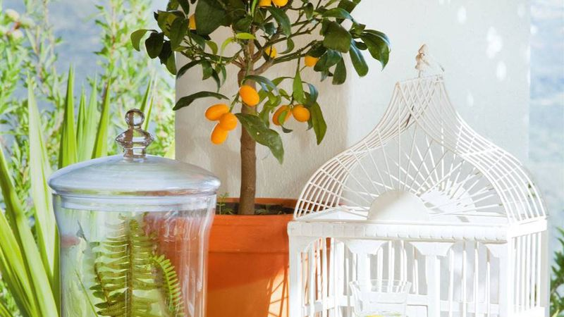 Árboles frutales pequeños que podés cultivar en maceta