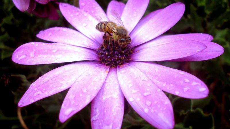 Los insectos: función e importancia para la vida