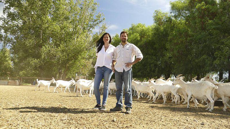 Historias: de la arquitectura y el turismo a la elaboración  de queso de cabra