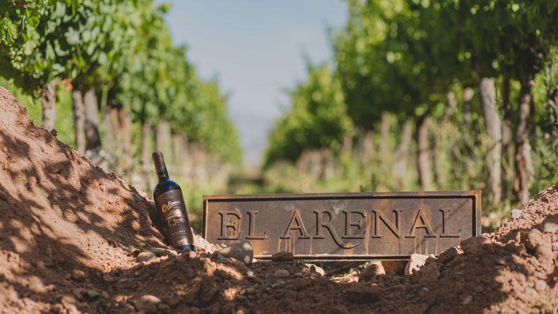 Cómo son los vinos de los viñedos más altos de Argentina en los Valles Calchaquíes