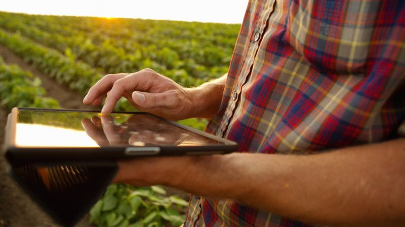 El comercio electrónico agrícola se afianza en Mendoza