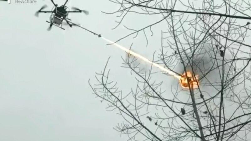 Desarrolladores chinos crearon drones lanzallamas para eliminar avisperos de árboles