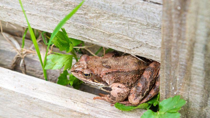¡Adiós insecticidas! Sapos y aves: tus mejores aliados contra los bichejos del jardín