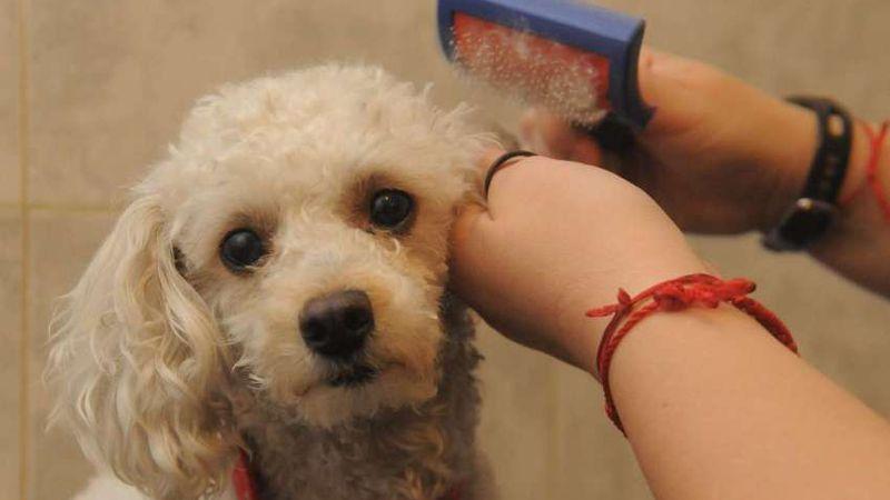 Mantener una mascota en Mendoza puede llegar a valer $100.000 por año