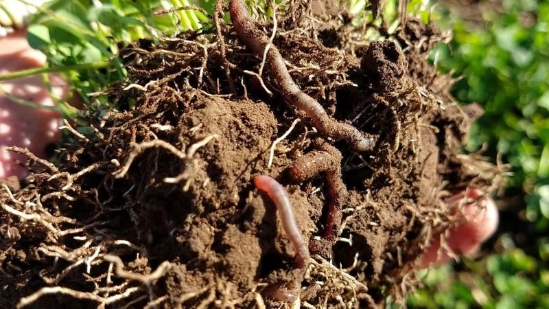 Subrayan la importancia de mantener los suelos vivos
